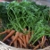 Carrots freshly harvested from MAʻO Organic farms