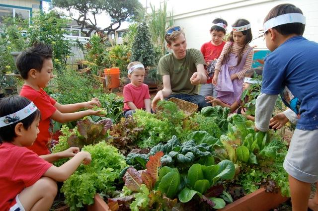 Kōkua Hawaiʻi Foundation Is Seeking Applicants For The School Garden  Coordinator Position For Its ʻĀINA In Schools Program. Primary Activities  Will Center ...